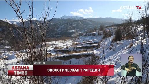 Новая экологическая трагедия в Алматы: о вырубке тысяч яблонь заявили активисты