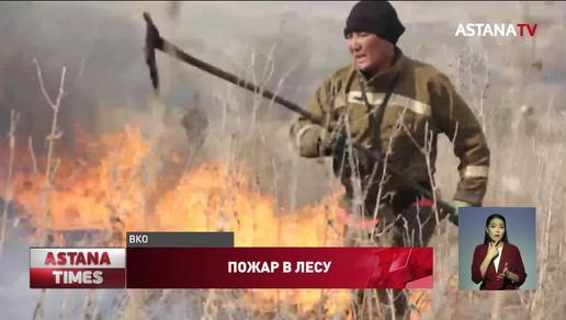В Восточном Казахстане горит реликтовый ленточный бор