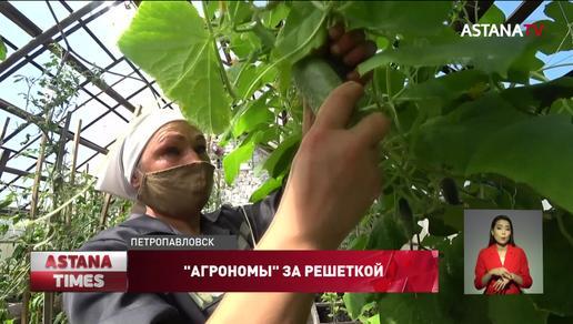 Осужденные в Петропавловске выращивают лимоны