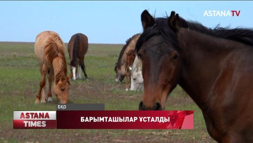 Батыс Қазақстан облысында ауылдықтарды қан қақсатқан барымташылар ұсталды