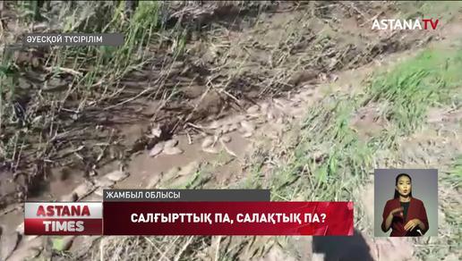 Жамбыл облысы Талас ауданындағы Ақкөл су айдынында балықтарды сала мамандарының салғырттығынан қырылып жатыр