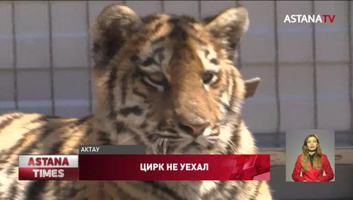 Директор российского цирка устроился дальнобойщиком в Актау, чтобы прокормить животных