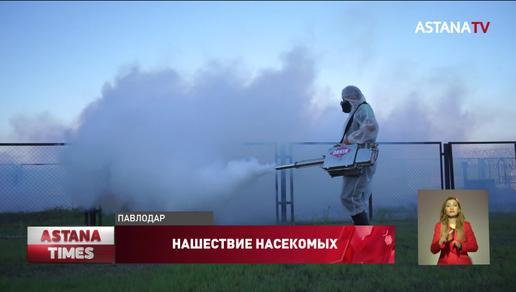 Жители Павлодарской области не могут выйти из дома из-за нашествия комаров