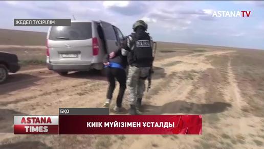Батыс Қазақстан облысының тұрғыны 366 дана киік мүйізімен ұсталды