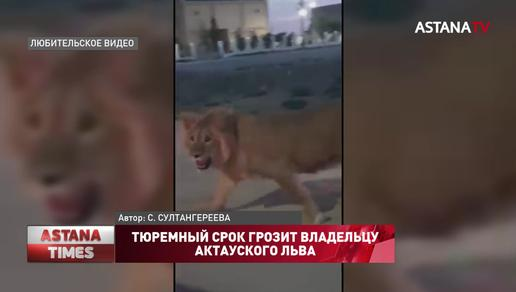 Тюремный срок грозит владельцу актауского льва