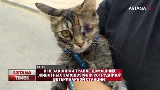 В незаконной травле домашних животных заподозрили сотрудника ветеринарной станции