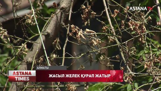Алматыға биыл күз ерте түсті