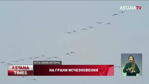 150 видов птиц могут исчезнуть в Казахстане из-за боевых действий