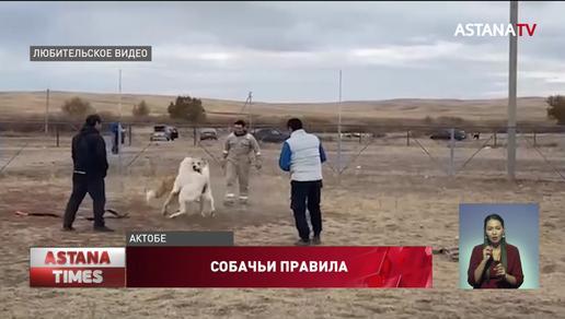 Собачьи тренировки попали под запрет: заводчики возмущены законопроектом о защите животных