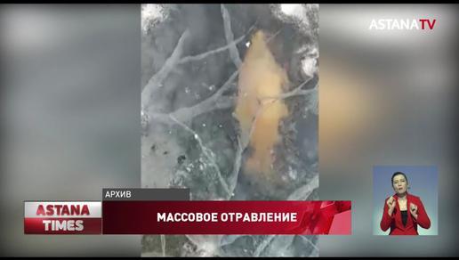 Причину массовой гибели рыбы назвали в Актюбинской области