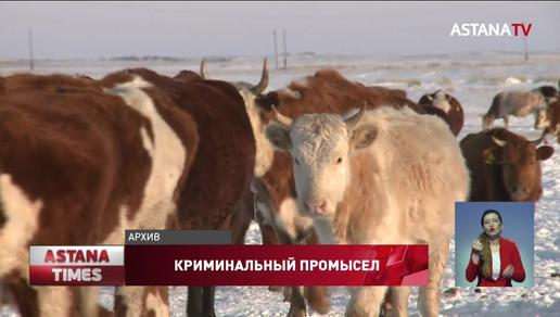 14 тысяч голов скота украли в Казахстане