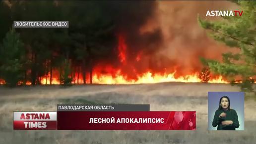 Больше суток тушили пожар в сосновом бору в Павлодарской области