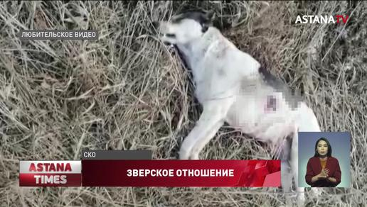 """""""Умирают в муках"""": петропавловцы возмущены массовым убийством домашних животных"""