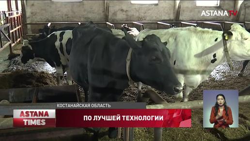 В отдалённом селе Костанайской области открылась современная молочная ферма