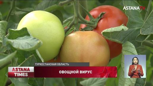 Опасный вирус нашли в казахстанских помидорах и перцах