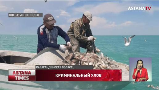 Браконьеров с 6 тоннами рыбы обнаружили в Балхаше
