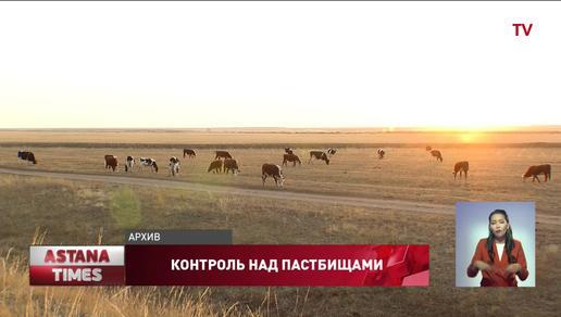 В радиусе 15 км от поселков в Казахстане выделят дополнительные пастбища