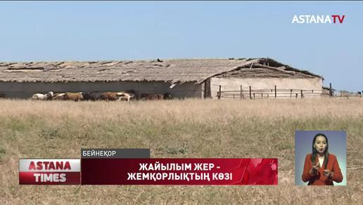 Халыққа 32 миллион гектар жайылым жер керек
