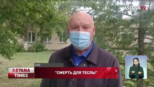 """""""Смерть для Теслы"""": разметку поверх ям высмеяли североказахстанцы"""