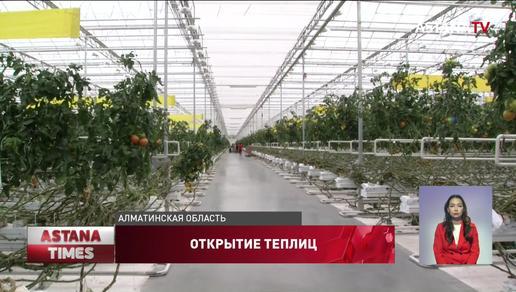 Крупный тепличный комплекс открыли в Алматинской области