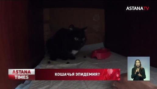Эпидемии среди кошек опасаются павлодарские зоозащитники