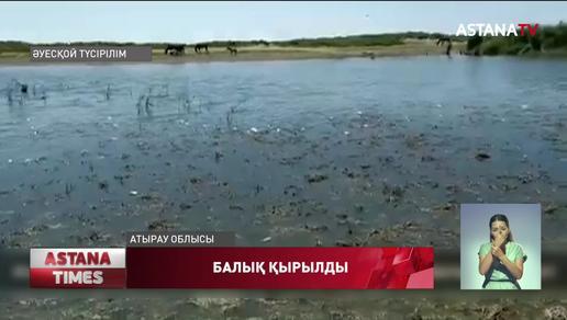 Атырау облысында балық қырылды