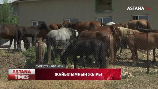 Түркістан облысында мал жаятын жерлер демалыс орындарына айналып кеткен