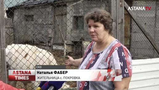 В Северном Казахстане резко выросли цены на сено: сельчане вырезают скот