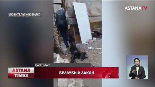 Павлодарец расстрелял собаку: зоозащитники жалуются на неработающий закон