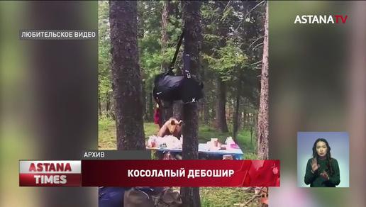 Медведь терроризирует жителей ВКО